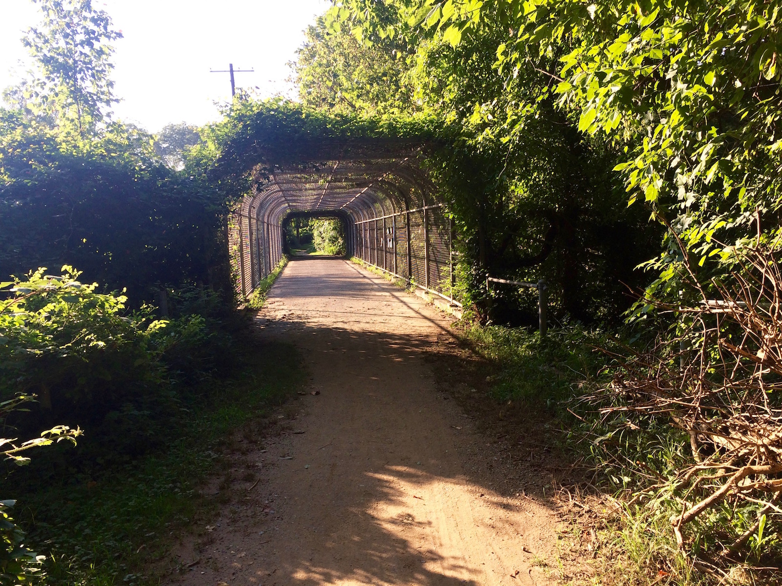 As DDOT studies options for Palisades Trolley Trail